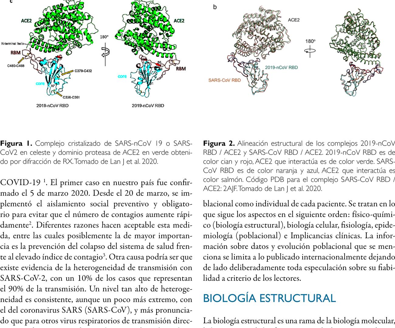 SARS nCoV-19 y ACE2: Cumbres borrascosas. Una relación intensa, estrecha, escondida o devastadora, pero siempre profunda
